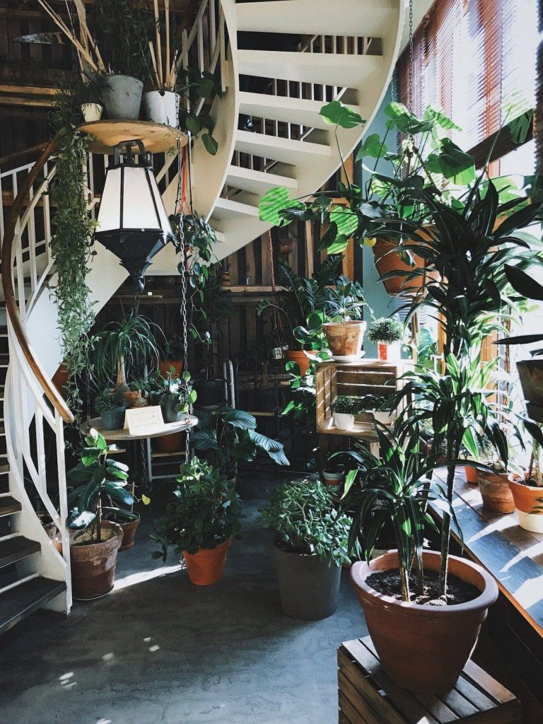 pic of stairs with plants